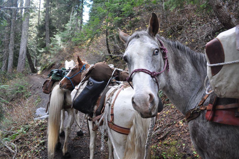 Cascade Sherpas Mt. Baker