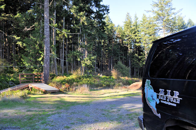 van in woods